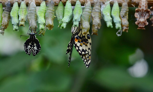 Why metamorphosis is needed to protect both patients and carers during inbed care
